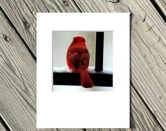50% OFF SALE Bird Photo, Red, Nature Picture, Animal Photograph, Grey, Black, White, Winter - 5x5 inch Print matted to 8x10 inches-Cardinal