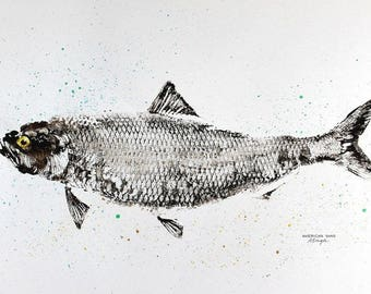 ORIGINAL American Shad GYOTAKU Fish art Rubbing 23X35 Lambertville New Jersey and the Delaware River by Barry Singer