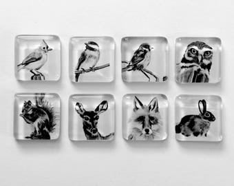 Magnets - Fauna Collection - made from original artwork - nature, woodland, birds, owl, fox, bunny