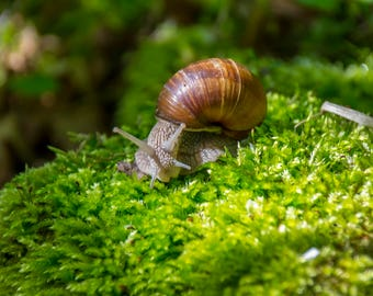 Spirulina Flavored Snail Food - Protein Based Snail Food
