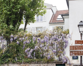 Paris Photography, Wisteria in Montmartre, Purple Wisteria, Spring in Paris, Gallery Wall Art, Nature, Parisian Window, Paris Garden