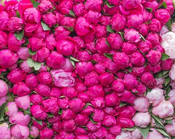 Paris Photography, Shades of Pink, Paris Peony Season,Pink Hues, Market in Paris, Pink Wall Art, French Print, Peony in France, Pink Peonies