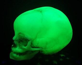 Replica Human Fetus Skull in glow in the dark resin