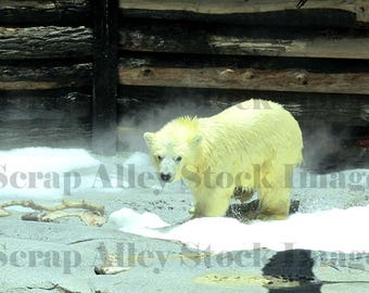 Stock Image - Baby Polar Bear