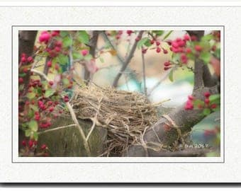 Bird Nest Photography Card - Photography Greeting Cards - Spring Blossoms Card - Bird Nest And Blossoms Photography Card