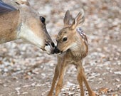 Cute MOM and BABY Deer Ph...