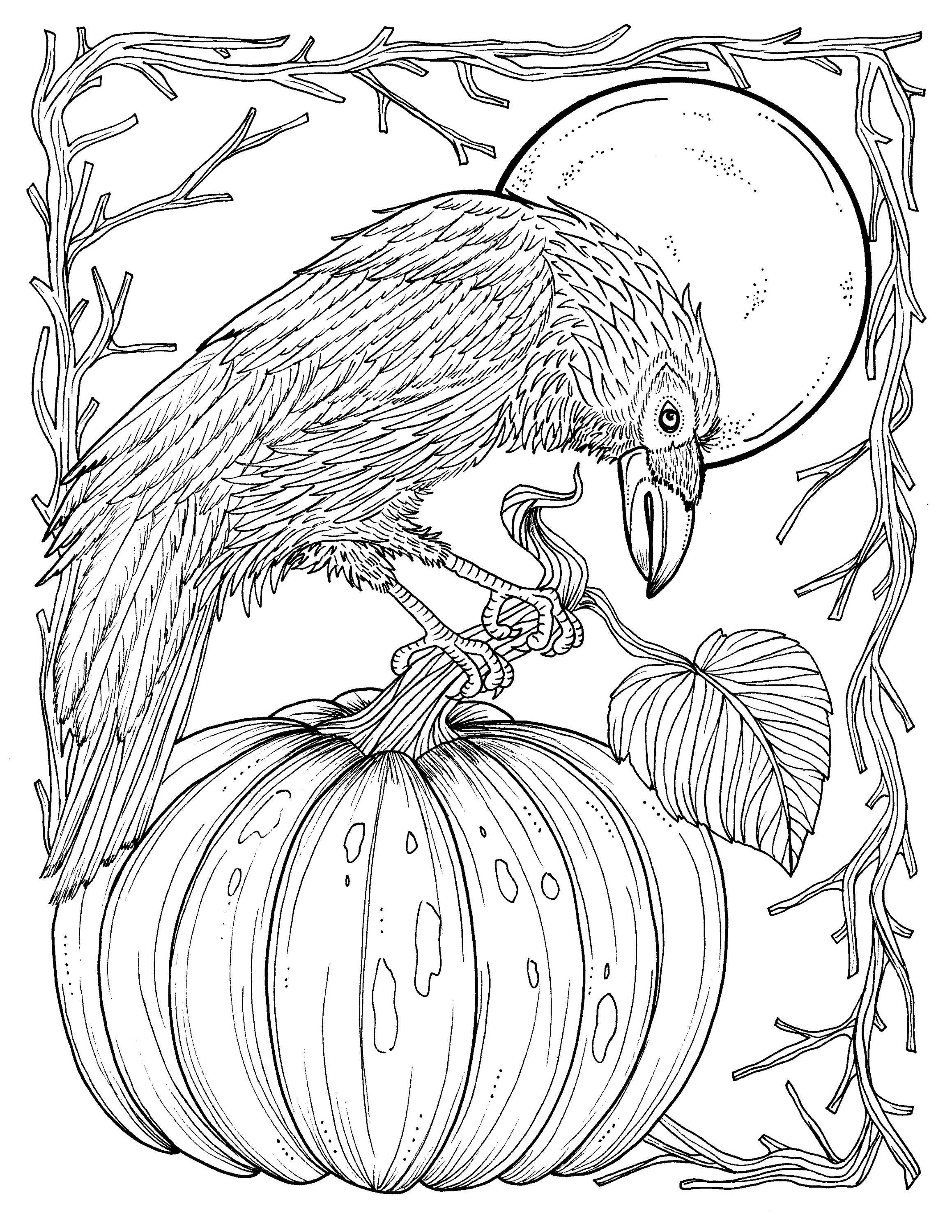 coloring pages of a crow - photo#5