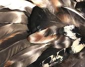 3 dozen + Assorted Cruelty-Free Feathers