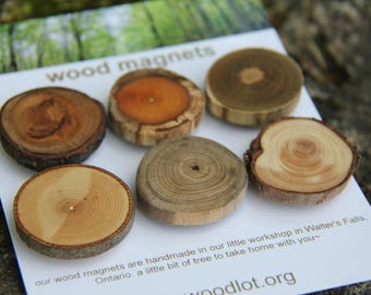 6 wood magnets - for your home or office - cherry buckthorn sumac ash butternut juniper