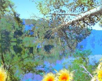 Abstract Photography. Art. Nature Art. Home Decor. Photography. Nature Decor. Nature Photography. Digital prints. Digital art.