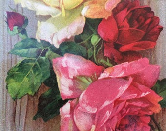 Pretty Edwardian Era Postcard with Beautiful Roses
