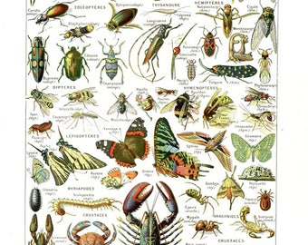 1948 Vintage French insect print Arthropodes French antique dictionary page Bug poster Bug decor Insect poster Insect gift artillery poster