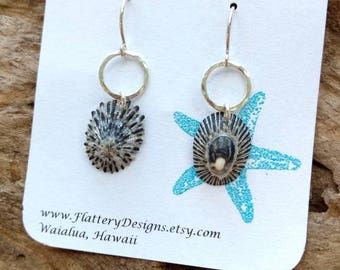 Hawaiian Opihi Shell Earrings