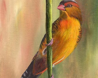 SALE Bird Painting Art Orange Breasted Waxbill Bird SFA Wildlife Original hand painted bird acrylic painting by Australian Artist Janet M Gr