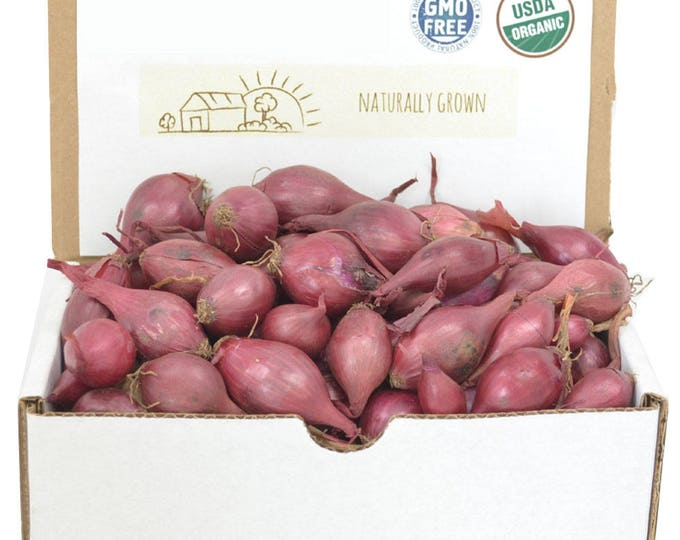 Red Onion Sets Organic   Red Baron Onion Bulbs 1 Pound - Non-GMO Spring Shipping