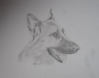 Donkey charcoal portrait