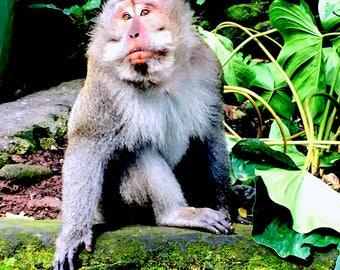 Digital Photo Monkey