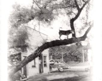 Dog up a tree ~  Vintage Snapshot Photo