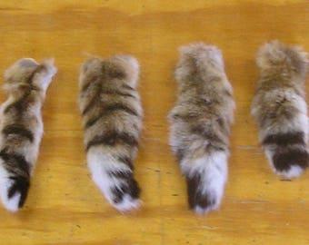 4 Bobcat Tails