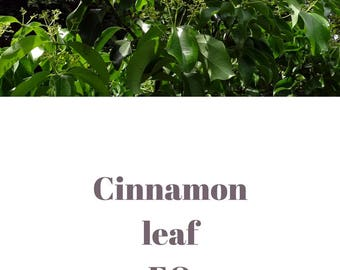 Cinnamon leaf essential oil QRDS