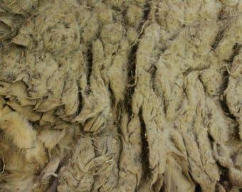 5+ LBS RAW WOOL • Suffolk/ Hampshire Cross • 2017 Unwashed White, fleece, wool • Spinning, Felting, Batting, Sheep Wool Fleece