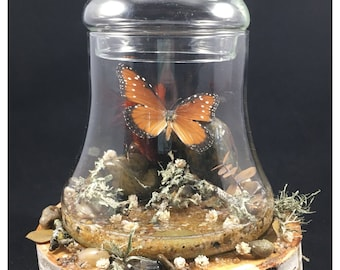 Beautiful Taxidermy Butterfly in a Custom Made Display