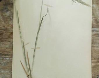 1938 Scandinavian Herbarium Specimen