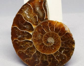 SALE - Ammonite. 35mm x 46mm.  Fossil