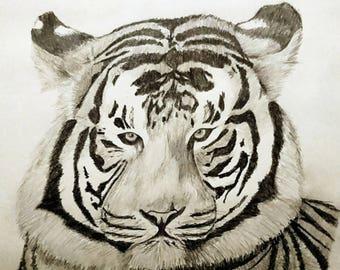 Tiger Sketch, A4 Pencil Art. Original Artwork.