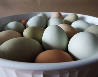 Hand Blow Free Range Chicken Eggs | Extra Light Mix - Green, Blue, Brown, White & Cream | Primitive, Natural Rustic Farmhouse, Cottage Chic