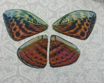 Forester Butterfly wings. Artbeads. Handmade fantasy beads. Insect wings. Entomologist. Resin