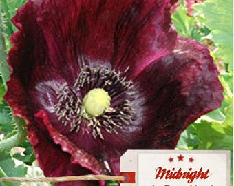 Papaver Somniferum 250 seeds, Midnight, Poppy Seeds