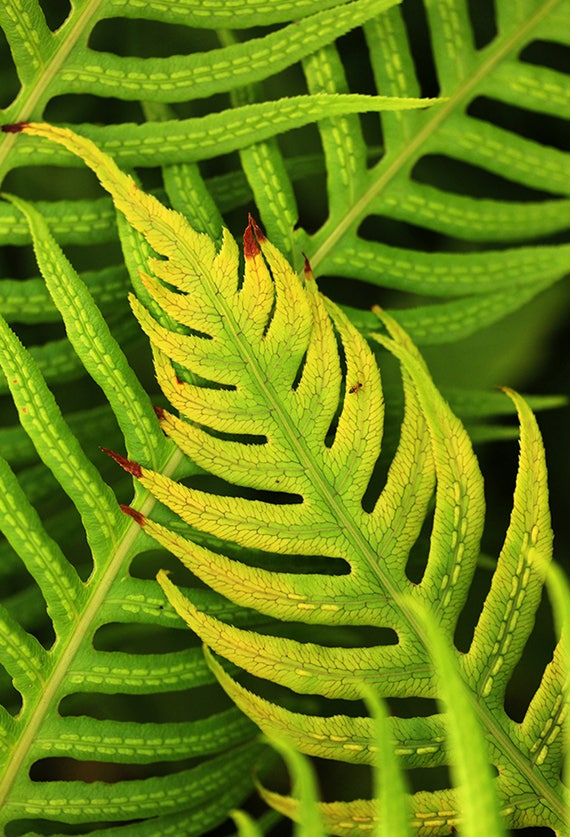 "Metal Art Print ""X"", Fern Photography Printed on a Brushed Aluminum Box, 16x24x1, Special Order Only"