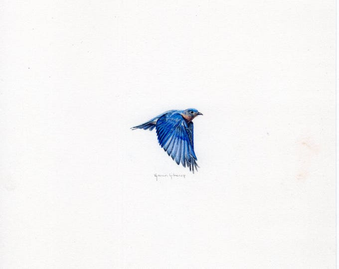"Print of miniature painting of a Blue Bird.  1 1/4"" x 1 1/4"" print of original Blue Bird painting on 5"" square german etching paper"
