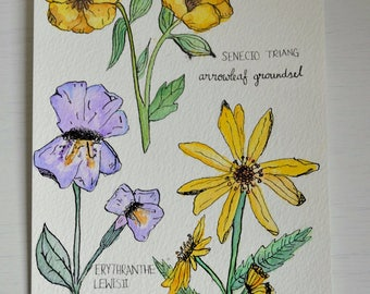 Botanical Sketches - Flowers in ink and watercolour