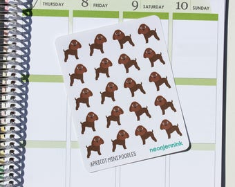 Apricot Miniature Poodle Stickers (Set of 20 Stickers)
