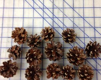 Red Pine Cones (25 cones/box), Wreath Cones, Decorating Cones, Home Decor Cones, Pine Cones, Garland Cones, Wedding Cone Decor