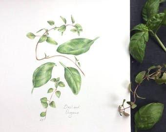 Basil and Oregano - original drawing