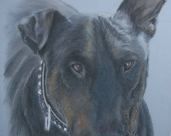 Custom pet portrait of Bull Terrier