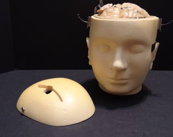 Trepanation Anatomical Teaching Model