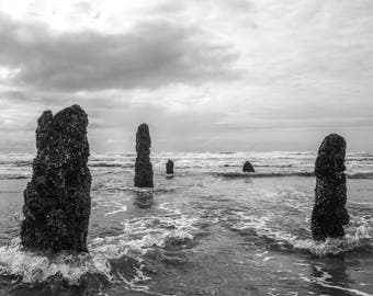 Oregon Coast Photography Neskowin Ghost Forest Pacific Northwest Ocean Fine Art Print