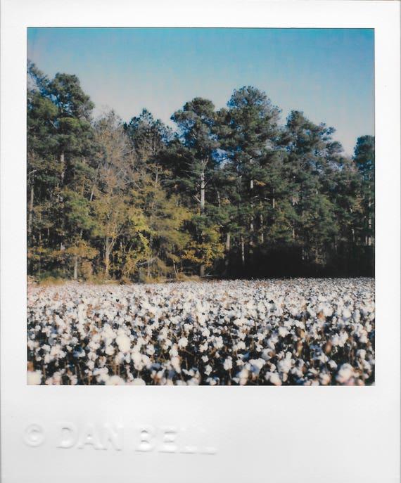 Cotton Pines