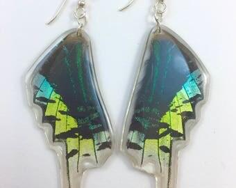 Real Butterfly Earrings (Urania Leilus)