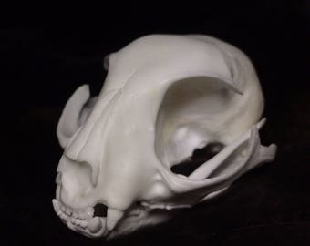 Replica domestic cat skull