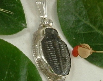 "Trilobite Necklace Sterling Silver Fossil Utah One of a Kind Natural Fossil 18"" Sterling Silver Necklace Chain Bug Handmade  416 G"