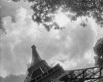 Eiffel Tower and Tree,  Paris, France