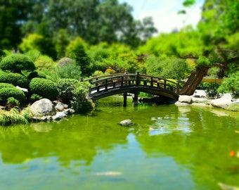 Wooden bridge over a koi pond in a japanese garden