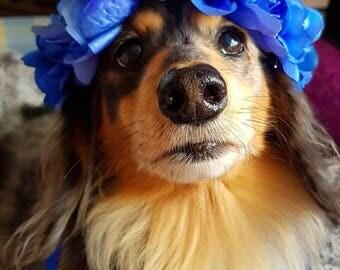 Royal Blue Pet Flower Crown