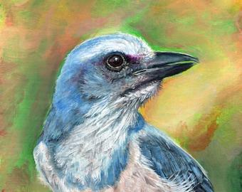 Scrub Jay - original acrylic painting on board - small tiny bird art SFA
