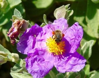 Flower & Bee Photograph Print